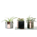 Mix It! Concrete Copper Air Plant Holder Set by PASiNGA