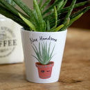 Aloe Handsome Plant Pot Vase