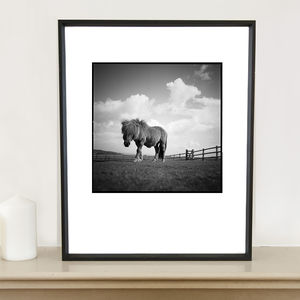 Billy, Shetland Pony Photographic Art Print