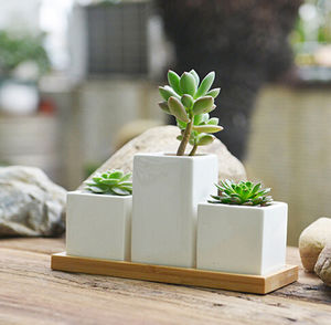 Three Mini Planters With Succulents Or Cacti - new in home