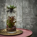 Plant Your Own Aquatic Landscape Experience For One