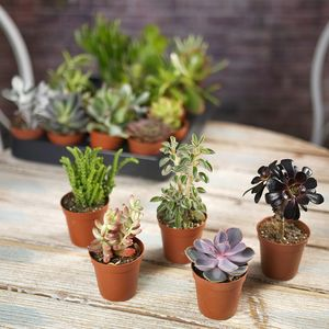 Succulent House Plant Mix - secret santa gifts