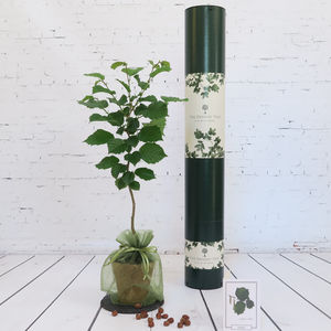 Personalised Organic Nut Tree Gift