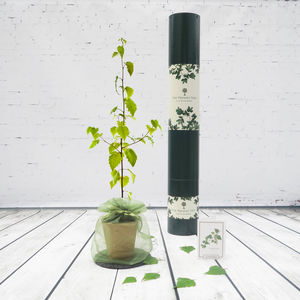 Sacred Silver Birch Tree Gift - gifts for him