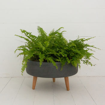 Contemporary Clay Planter With Beech Legs