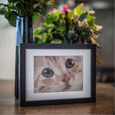 Personalised Cat Tapestry Kit From Your Favourite Photo