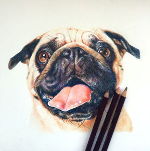 Personalised Pet Portrait Drawing - drawings & illustrations