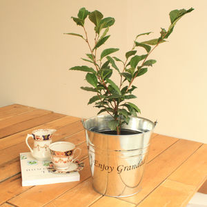 Personalised 'Grow Your Own Tea' Gift Set