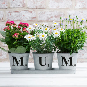 Set Of Three Personalised Zinc Buckets In A Tray - mum loves gardening