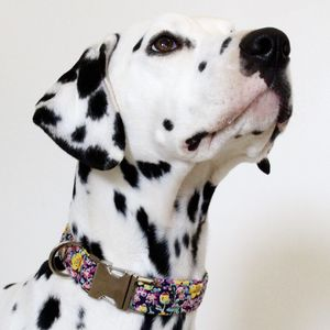 Florence Liberty Fabric Dog Collar