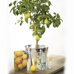 Grow Your Own Gin And Tonic Gift Set - gifts for gardeners