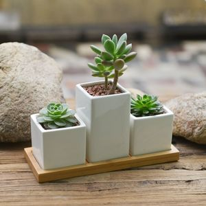 Three Mini Planters With Succulents Or Cacti - flowers & plants
