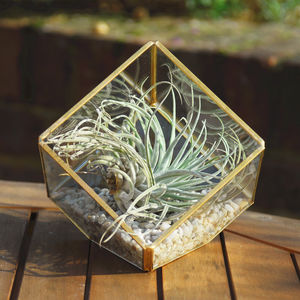Copper Colour Glass Cube Air Plant Terrarium Kit - terrariums