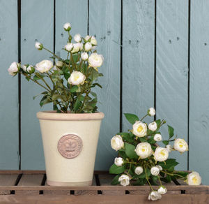 Kew Gardens Pot With Rose Shrub Choice Of Colours - new in garden