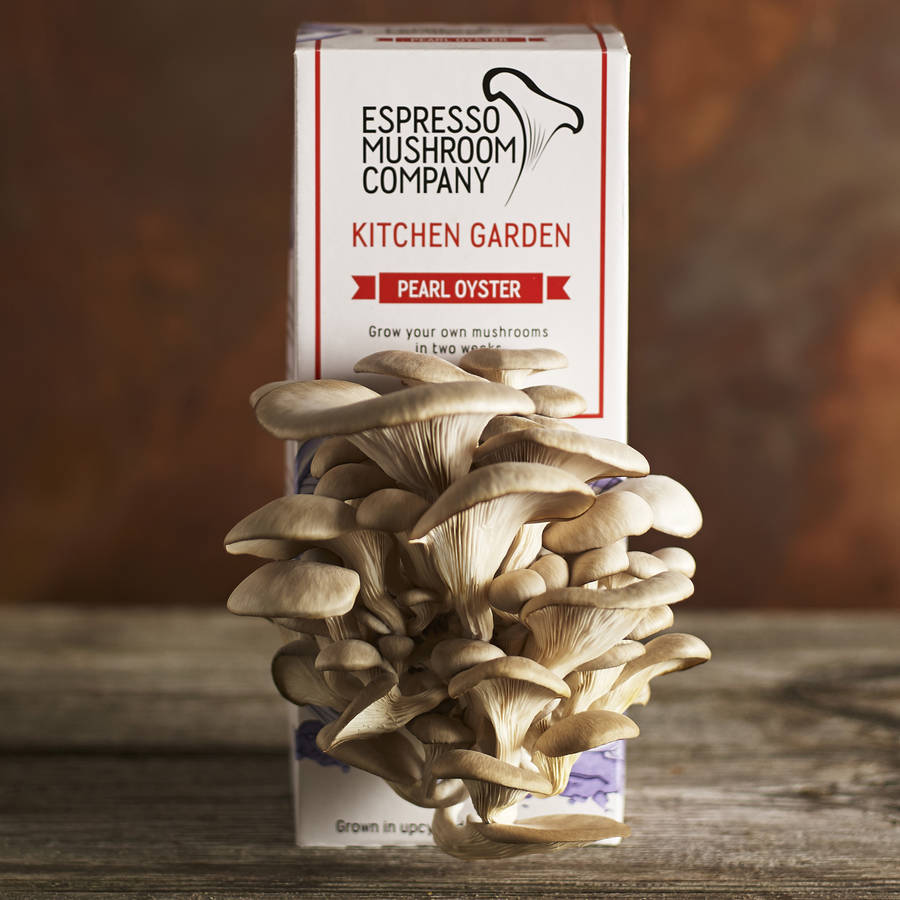 Kitchen Garden Mushrooms Pearl Oyster Grow Your Own Mushroom Kit By Espresso Mushroom