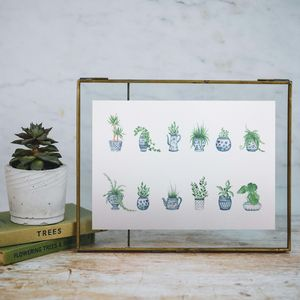 Botanical House Plant Watercolour Print - posters & prints