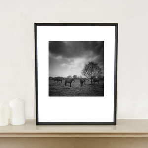 Horses In Field, Art Print - nature & landscape