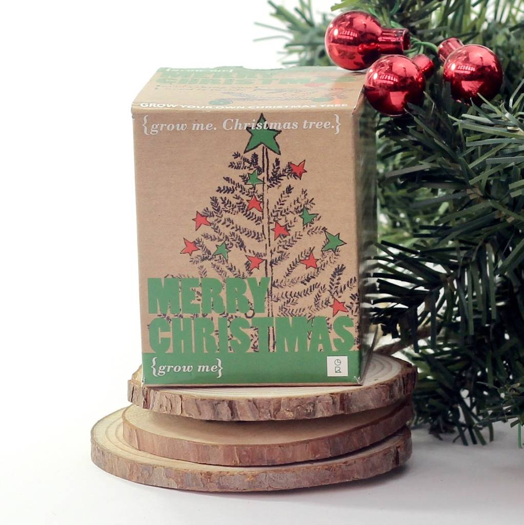 grow your own christmas tree - Christmas Tree In A Box