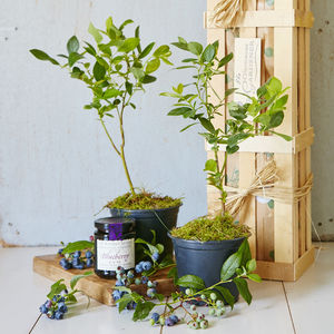 Grow Your Own Blueberry Jam Gift - gifts for fathers
