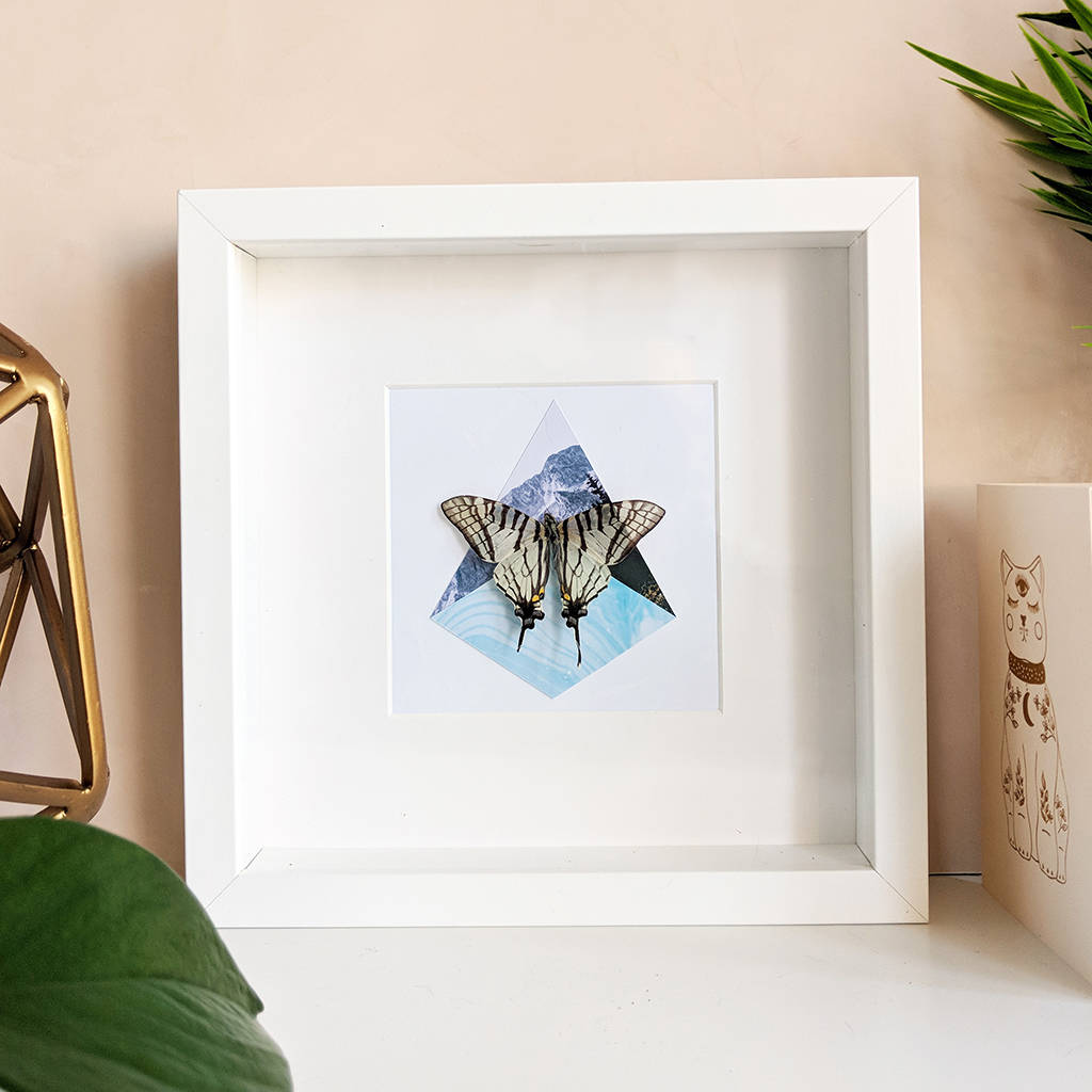 Framed Scarce Swallowtail Butterfly On Collage