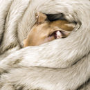 Faux Fur Blanket In Oatmeal