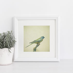 Bird Study Iii Photographic Nature Print - prints & art sale
