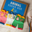 Animals Socks Box Of Three