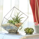 Happy New Home Terrarium