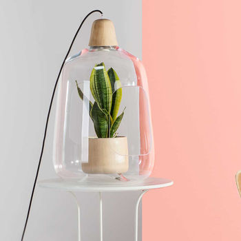 Glass Vase And Lamp