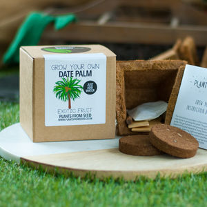Grow Your Own Date Palm Plant Kit - seeds & bulbs