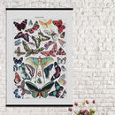 Butterfly Print In French