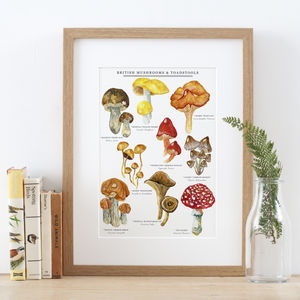 Mushrooms And Toadstools Illustrated Giclée Print - posters & prints