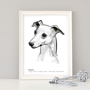 Personalised Whippet Art Print - animals & wildlife