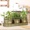 Three Personalised Country Kitchen Herb Pots In Tray