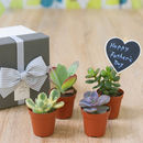 Succulents Or Cacti House Plant Father's Day Gift Box