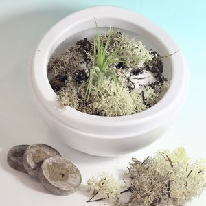 Floating Terrarium And Plant Starting Kit - home accessories