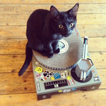 Cat Scratch Dj Deck