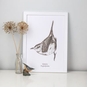 Sepia Wren Bird Drawing A3 Fine Art Print