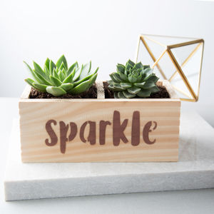 'Sparkle' Desktop Planter With Succulents - pots & planters