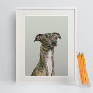 Greyhound Peekaboo Animal Print - nursery pictures & prints