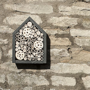 Orkney Insect House