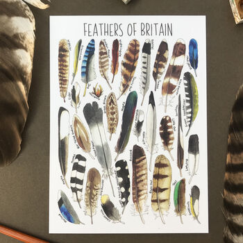 Feathers Of Britain Illustrated Postcard