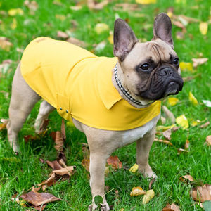 All Weather Dog Coat, With Carry Pouch - dogs