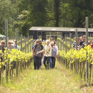 English Vineyard Experience For Two With Cheese - experiences
