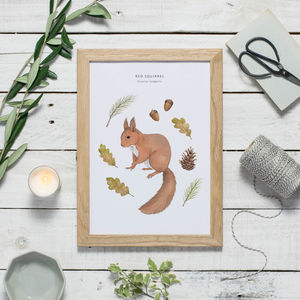 Red Squirrel Watercolour Print - children's pictures & paintings