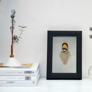 Framed Golden Reeves Pheasant Feather - mixed media & collage