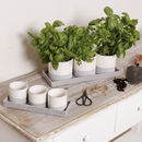 Set Of Three Cream And Mushroom Plant Pot Selection