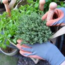 Grow Your Own Herbs Gardening Gift Set