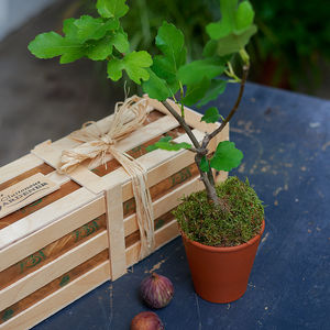Fig 'The Family Tree' Gift - personalised