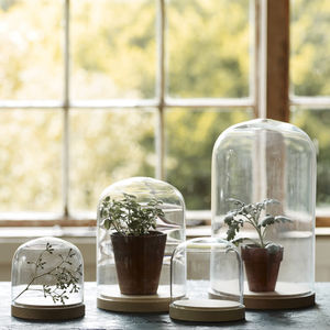 Bevin Beech Based Glass Dome - on trend: indoor gardens